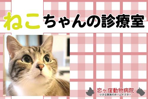 猫ちゃんの診療室